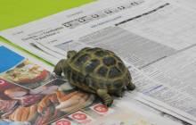 2020-03-10 : Le train des petits copains : L'histoire de la petite tortue qui ne voulait plus être une tortue....