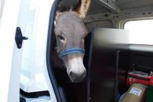 2021-10-15 : Avec nos amis, les ânes Kiwi et Jackson